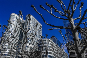 la-defense-confrontation-arbres
