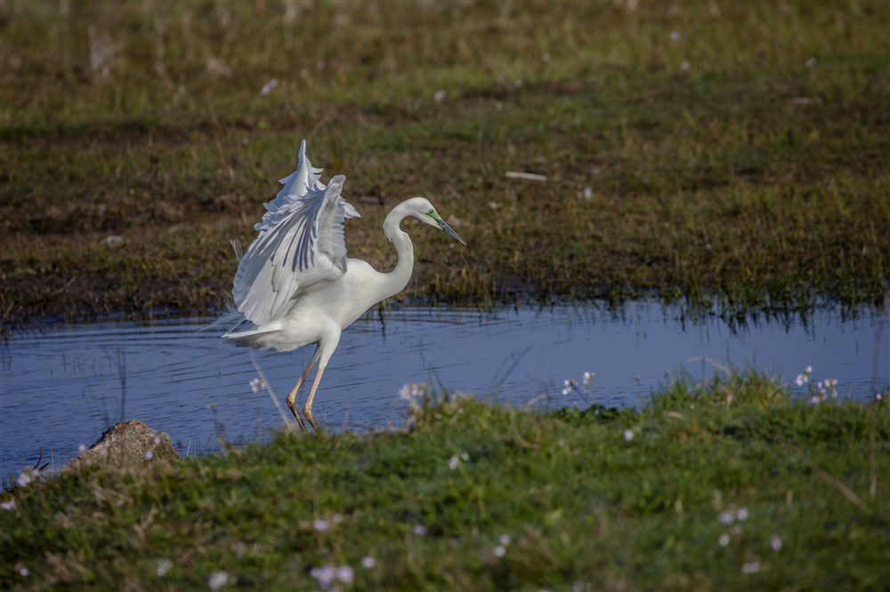 baiedesomme-lecrotoy-grandeaigrette.jpg
